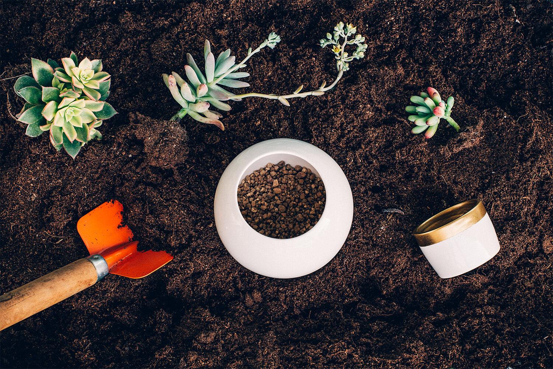 Fórmula Secreta: Sustrato para Cactus y Suculentas.