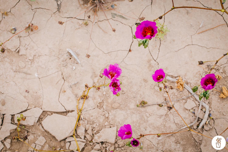 Un espectáculo natural: El Desierto Florido