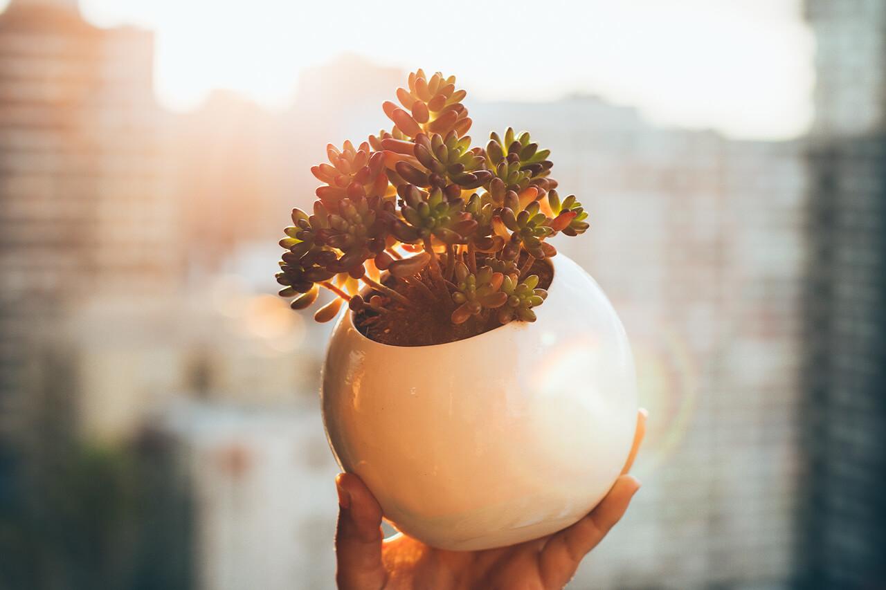 Luz en Cactus & Suculentas
