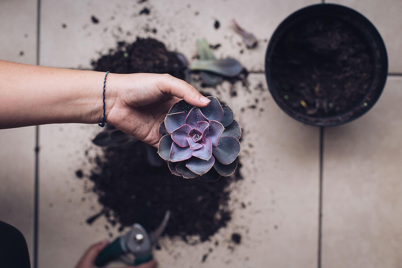 Etiolación: Pasos para salvar tu planta estirada