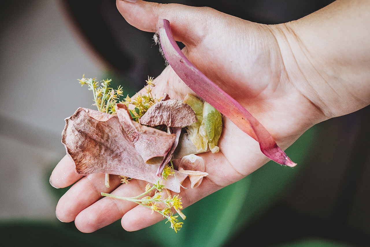 ¿Por qué se caen las hojas de mis suculentas?