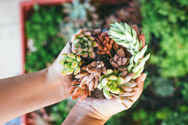 Periodo de latencia en Cactus & Suculentas